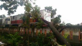 Kereta Api Pohon Tumbang Bojonegoro